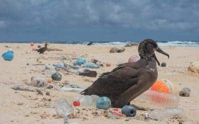 'the ocean clean up' – New technologies to rid our oceans of plastic pollution