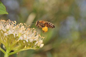 Bürger, Bienen, Biodiversität – eine Initiative des BUND Naturschutz in Bayern e.V. 2019-2021