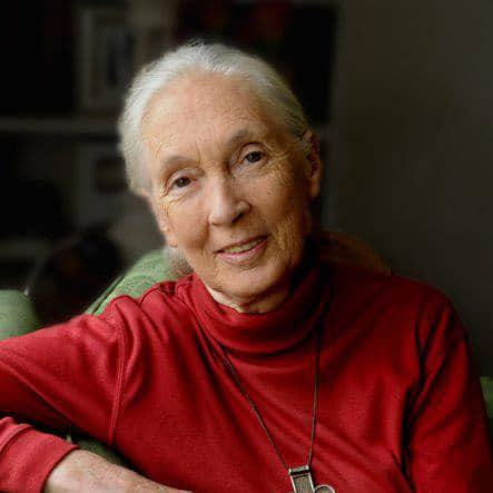 Jane Goodall gets awarded the Environmental Peace Prize 2019
