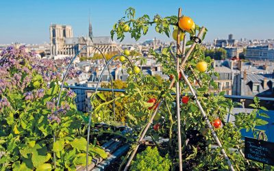 Paris Introduces 32 More Sites for Urban Farming