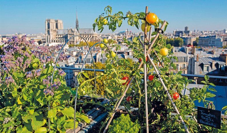 Paris Introduces 32 More Sites for Urban Farming