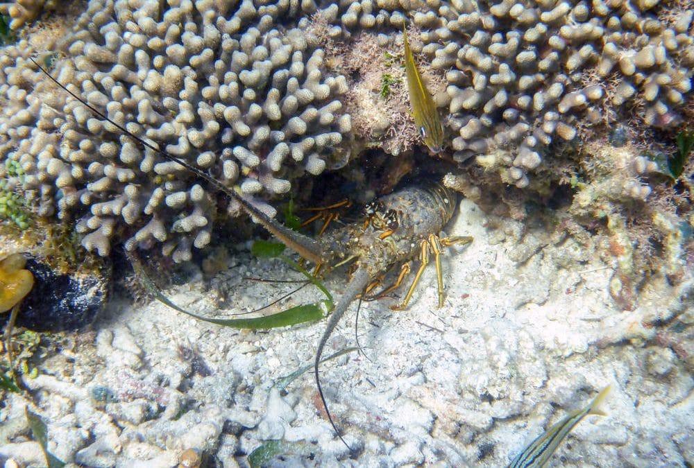 Korallen als Klimaarchiv – Ein Forschungsprojekt der Studenten der FU Berlin